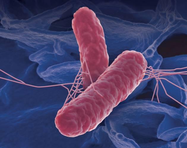 Είναι όλα τα στελέχη Salmonella το ίδιο βλαβερά;