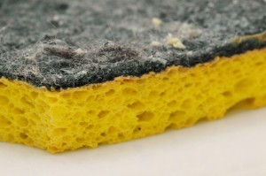 dirty-sponge